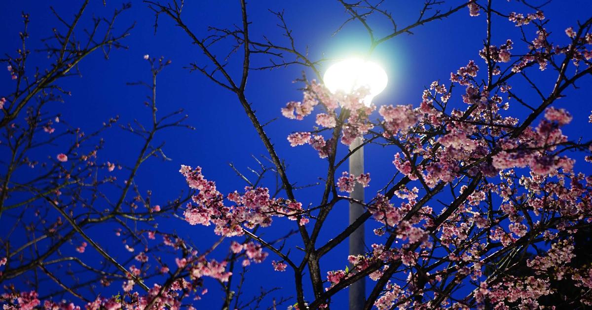 ❖樂活夜櫻與色溫❖ —— 跟著Azure攝影眼看世界